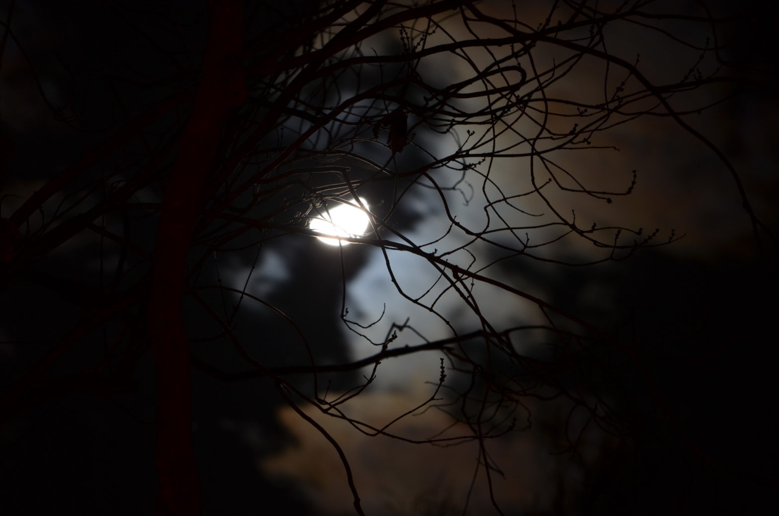 moonlight behind tree branches